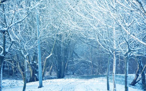 Zimowe słowiki